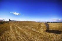 Ecosse, East Lothian, balles de foin sur le terrain pendant la journée — Photo de stock