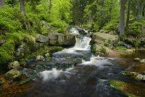 Германия, Ловер-Саксония, Гарц, Водопад горного ручья Варме-Боде, Ловер-Бодефелл — стоковое фото