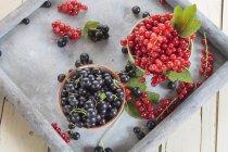 Ansicht von zwei Schalen mit roten und schwarzen Johannisbeeren auf Tablett — Stockfoto