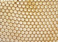 Amarelo de favos de mel vazios, close-up — Fotografia de Stock