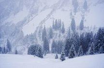 Autriche, plus grande vallée de Walser, Damuls — Photo de stock