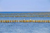 Uccelli di gabbiano da frangiflutti — Foto stock