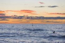 Surfeur au lever du soleil nageant dans l'océan — Photo de stock