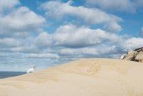 Dänemark, Nordjütland, Hund im Sand Düne am Leuchtturm Rubjerg Knude — Stockfoto
