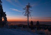 Германия, Гессен, горы Taunus, заснеженные дерево в утреннем свете — стоковое фото