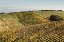Italia, Toscana, Val d 'Orcia, paisaje ondulado con campo geométrico - foto de stock