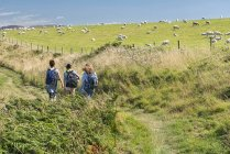 UK, Wales, People hiking in Pembrokeshire Coast National Park with sheep in background — Stock Photo
