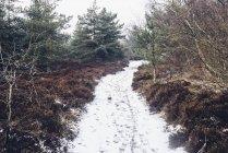 Данія, Hals, прибережних шлях у денний час зими — стокове фото