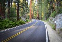 Route et les arbres par le biais de Sequoia National Park, Californie, é.-u. — Photo de stock