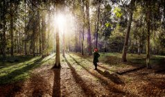 Back view of woman wearing red cap standing at forest glade — Stock Photo