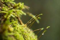 Moos et l'eau tombe sur fond flou vert — Photo de stock