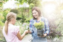 Customer paying for plant in a nursery — Stock Photo