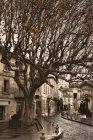 France, Avignon, tree on street during daytime — Stock Photo