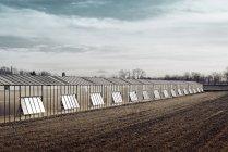Germany, Duesseldorf, Duesseldorf-Hamm, greenhouse on field — Stock Photo