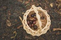 Cesta con castañas frescas recogidas en madera oscura - foto de stock
