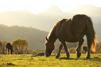 Grazings лошадей в природный парк Фуэнтес дель Narcea, Degana и Ibias, Астурия, Испания — стоковое фото