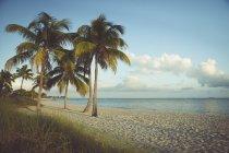 США, Кі-Уест, штат Флорида пальмами на пляжі — стокове фото