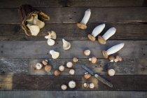 Різні види гриби — стокове фото
