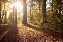 Trees and sunshine in autumn at Benrath forest, Duesseldorf, Germany — Stock Photo