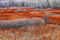Weidenanbau im Herbst — Stockfoto