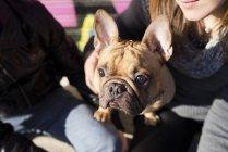 Französische Bulldogge mit Eigentümern Nachschlagen in Nahaufnahme — Stockfoto