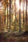 Árboles y sol en otoño en el bosque de Benrath, Duesseldorf, Alemania - foto de stock
