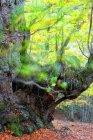 España, Avila, otoño en el bosque de El Tiemblo - foto de stock