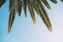 Спрячьте в руке дерево и голубое небо. — стоковое фото