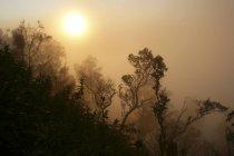 Indonesien, Java, Silhouette der Bäume am Bromo Tengger Semeru National Park — Stockfoto