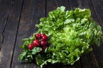 Цикорій салат і Червона редиска — стокове фото