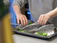 Preparing gilthead seabream, on baking tray — Stock Photo