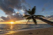 Сейшельские острова, Праслин, Anse Kerlan, кокосовой пальмы и кузен остров на закате — стоковое фото