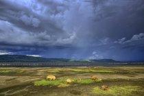 Kenya, Parco Nazionale del Lago Nakuru, iene avvistate di fronte al Lago Nakuru — Foto stock
