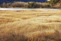 Spanien, Provinz Cuenca, Naturpark Serrania de Cuenca, Lagune tagsüber — Stockfoto