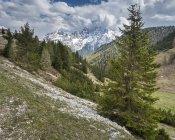 Itália, província de Belluno, natureza Parque Tre Cime, Dolomitas de Sesto, Prato Piazza, morro com árvores e grama — Fotografia de Stock