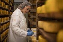 Сыр фабричный рабочий контроль созревания сыра — стоковое фото