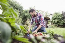Adult caucasian man gardening in vegetable patch — Stock Photo