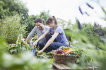 Smiling couple gardening in vegetable patch — Stock Photo