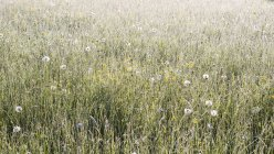 Loretto meadow during daytime — Stock Photo