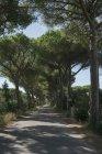 Italy, Tuscany, Maremma, pine-lined road — Stock Photo
