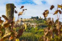 Хорватия, Истрия, Мотовун позади виноградник — стоковое фото