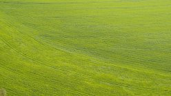 Blick auf Wiese mit Traktorspuren, Deutschland — Stockfoto