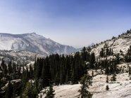 Paysage de montagne avec des arbres dans le Parc National de Yosemite, Californie, é.-u. — Photo de stock