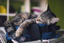 Gatto di Tabby dormire su piccola borsa a casa — Foto stock