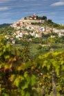 Хорватия, Истрия, Мотовун позади виноградник в дневное время — стоковое фото