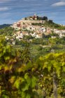 Kroatien, Istrien, Motovun hinter Weinberg tagsüber — Stockfoto