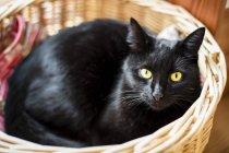 Чорна кішка, лежачи в плетеними кошику і дивлячись на камеру — стокове фото