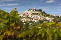 Croacia, Istria, Motovun detrás de Viña durante el día - foto de stock