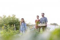 Щаслива родина трьох тримає ящик з овочів — стокове фото