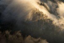 Österreich, Tirol, Kufstein, Bäume und Nebel — Stockfoto
